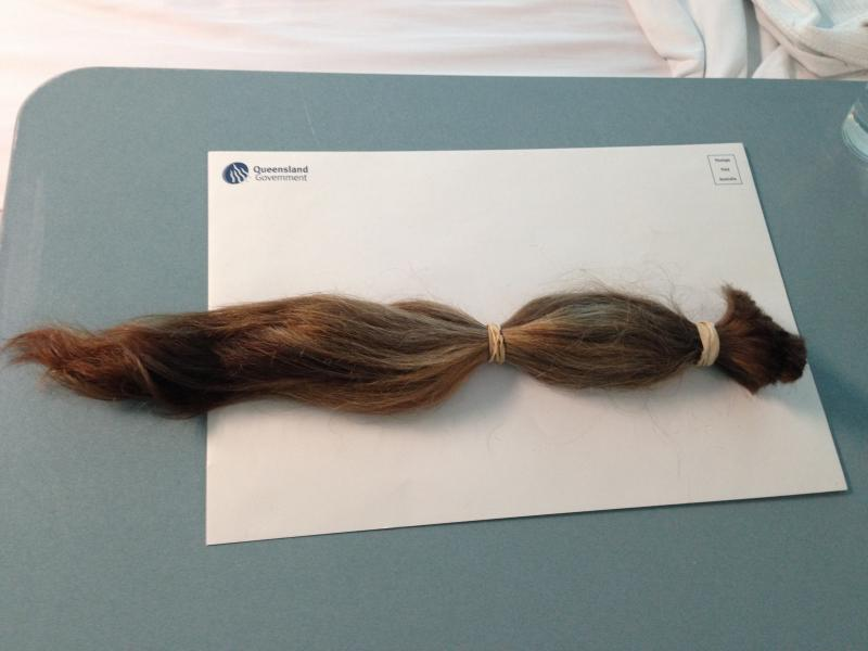 Ponytail - ready to donate.